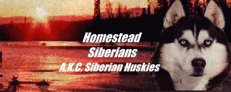Homestead Siberians